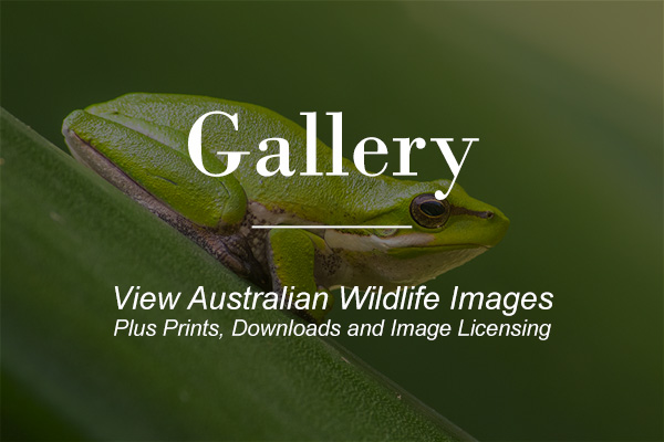 Macrokosm.com - Image Gallery, Prints, image downloads and image licensing