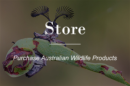 Macrokosm store - browse products featuring Australian Native Wildlife