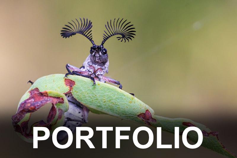 beetle-portfolio-button1