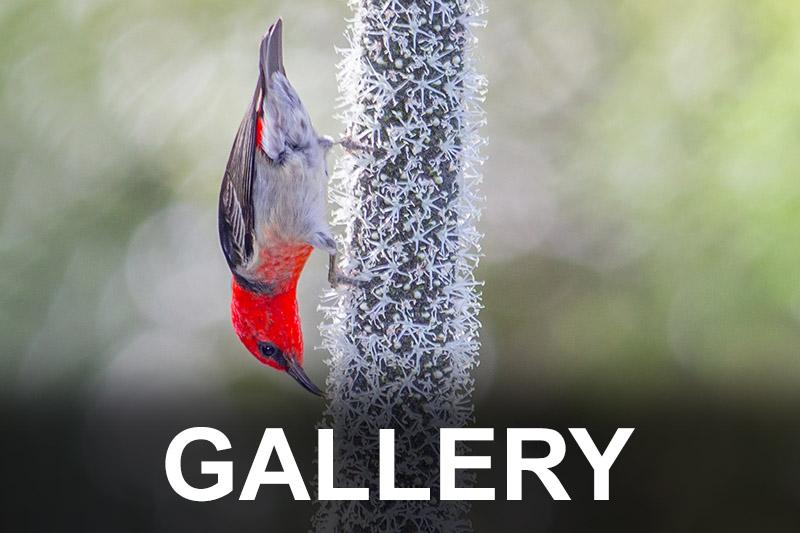 bird-gallery-button