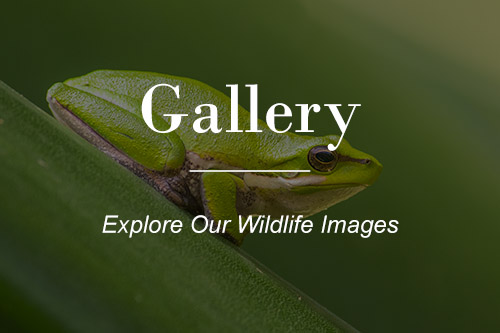 Australian Native Wildlife Gallery
