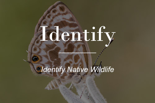 Identify Australian Native Wildlife