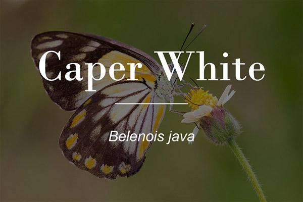 Caper White button