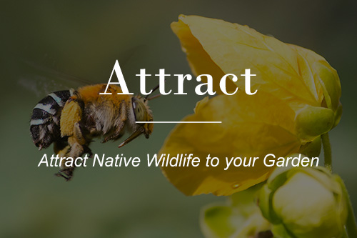 Attract native wildlife to your garden