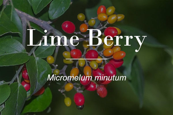 Clusterberry -Lime berry- button image