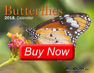 Macrokosm 2018 Butterfly Calendar - Buy Now button