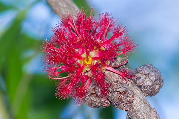 Secret Garden: Tondoon Botanic Gardens