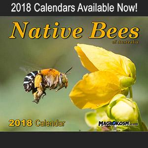 Australian Native Bees - calendar 2018