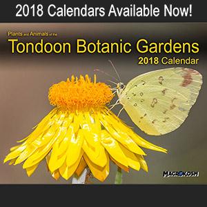 tondoon botanic gardens 2018 calendar cover